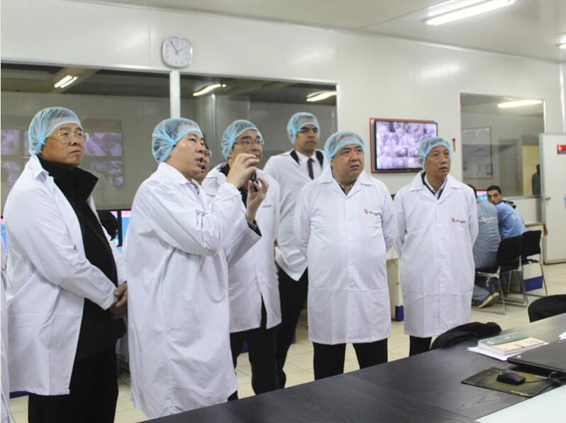 湖北省副省长许克振一行考察埃及公司