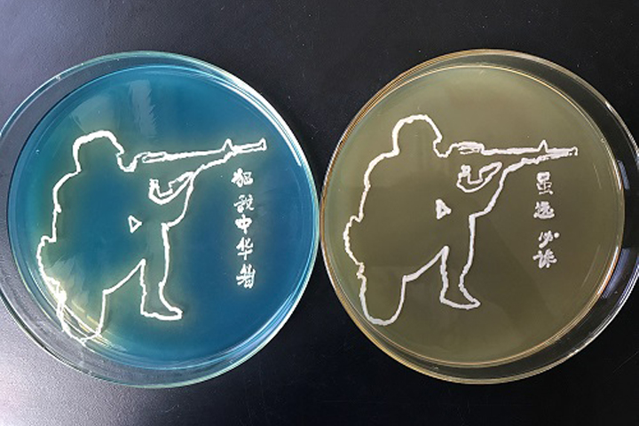 【中国培养皿艺术大赛ing】高校、科研院所参赛作品欣赏(部分)